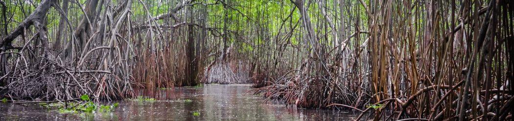 canales del pantano cibuco